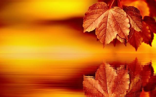листя, вода, відображення, БРИЖІ, макро, роса, красиво, кленові, листя