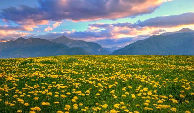 краєвид, долина, квіти, гори, серпанок, небо