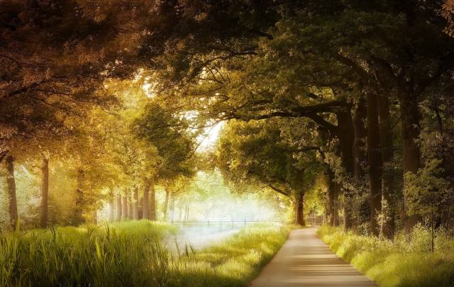 nature, landscape, Park, trees, track, grass, the pond