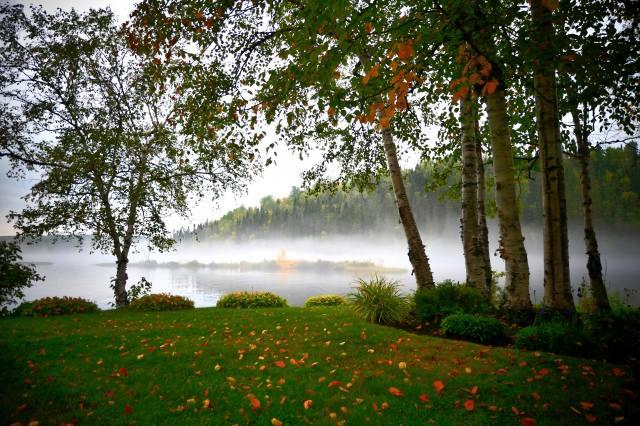 nature, trees, birch, autumn