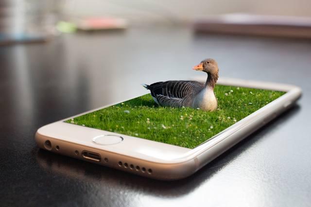 smartphone, meadow, гусыня, photomanipulation
