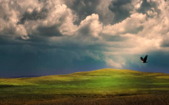 clouds, eagle, flight, grass