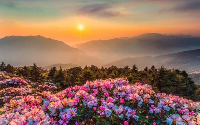 meadow, flowers, mountains, the sky, the sun, rays