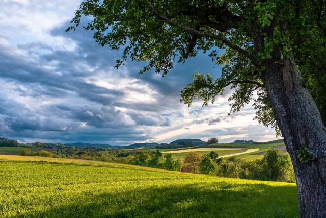 trees, field, the sky