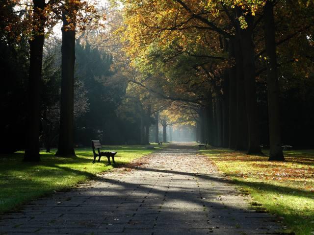 сонце, парк, Алея, лавка