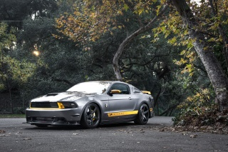 Ford, Mustang, GT, silvery, Ford, Mustang, silver, muscle car, the front part, trees, road, forest