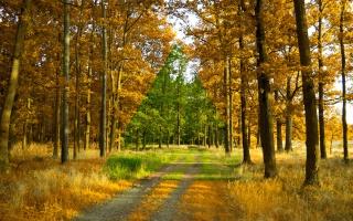 літо, осінь, ліс, дерева, дорога