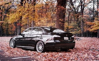 bmw, 335i, BMW, auto Wallpaper, cars, drives, Cars, auto wallpapers, autumn, leaves, forest