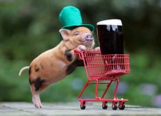 pig, stroller, truck