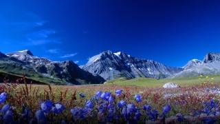 mountains, meadows, flowers, the sky, already a lot