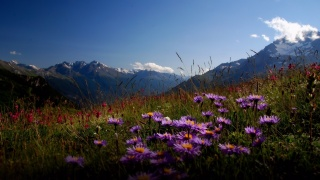 mountains, valley, flowers, beauty