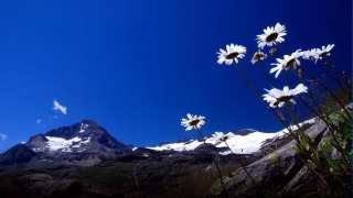 the sky, mountains, chamomile, the beauty