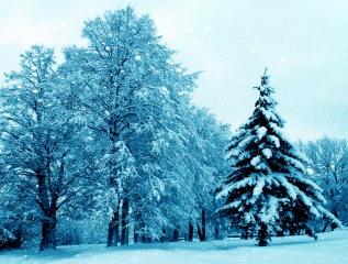 природа, зима, снег, красиво, 2015