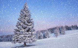зима, деревья, снег, путь, гора, лед