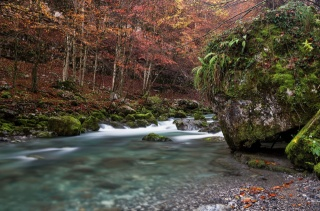 river, forest, moss, stone, trees, beauty