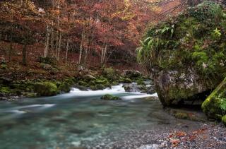 река, лес, мох, камень, деревья, красота