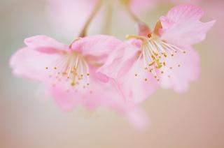 цветок, красота, макро, лепесток