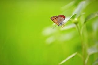 бабочка, фон, красота, макро