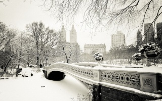 winter, New York, bridge, snow, tree, ice