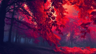 forest, red, tree, leaves, sunlights