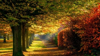 path, autumn, trees, leaves, colors