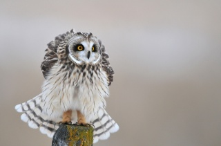 Owl, bird, birds of the world, beauty, cool