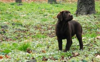 щенок, трава, собака, щенок, стекло, собака