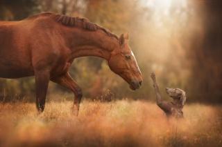 horse, dog, friends, macro, photo, nature, positive