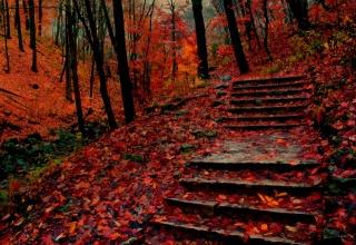 les, podzim, zeleň, stromy, krása, schody