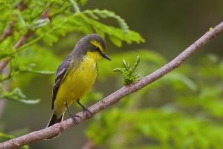 птица, красота, птицы мира