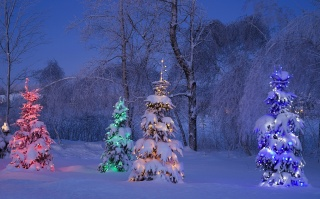 nature, winter, evening, New year, snow, beautiful