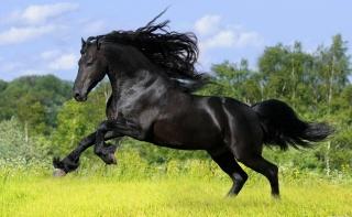 кінь, красива, літо, макро, фото, природа, ліс