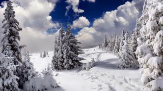 vánoční stromky, sníh, závěje