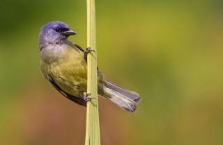 pták, krása, ptáci světa