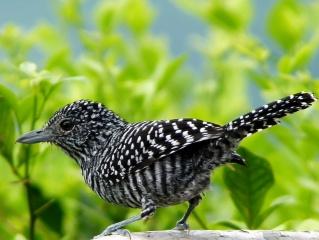 pták, ptáci světa, krása, docela v pohodě