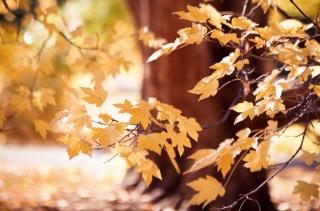 осінь, гілка, листя, сонце, краса