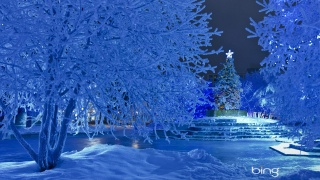 Park, winter, New year, tree, beautiful, pros, photo, bing