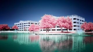 růžové, stromy, voda, pramen, budova, sky