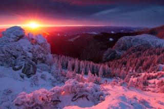 winter, mountains, the sun, forest, Carpathians, beautiful