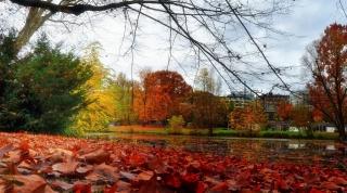 podzim, rybník, stromy, zeleň, krása