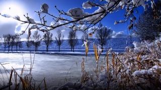 снег, зима, солнце, ветка