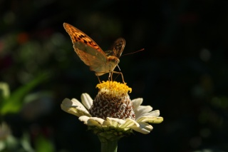 butterfly, flower, summer