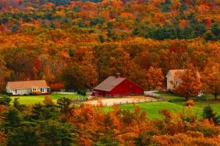 podzim, les, stromy, doma, krása