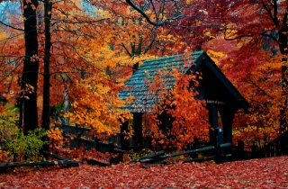 podzim, altán, stromy, park, krása