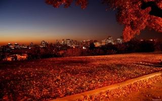 podzim, strom, listy, rock, zelená, patch