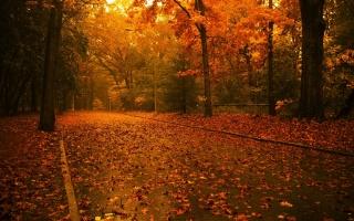 осень, дерево, листья, рок, зеленый, патч