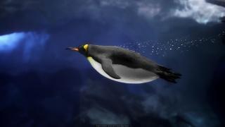 Penguin diver, Christopher Prins
