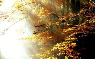 forest, ray, light, sunlight, autumn, trees