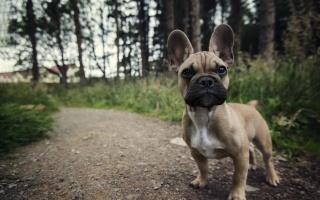 dog, view, each, summer