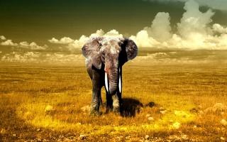 elephant, lonely, field, trees, sky, wild